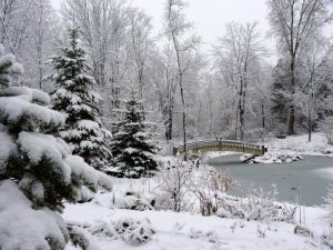 Snowy pine trees and snowy pond with bridge
