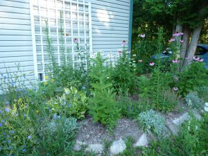 Butterfly and Bee Attractor Garden