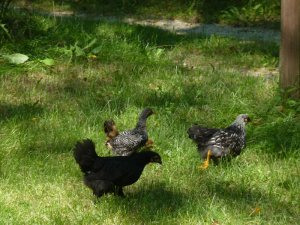 Running flock!
