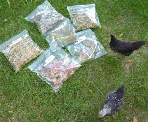 Watch out! Chickens enjoy spinach seeds....