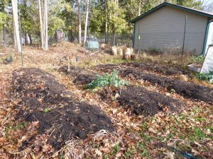 Garden beds with layers of compost and shredded leaves--ready for next season!