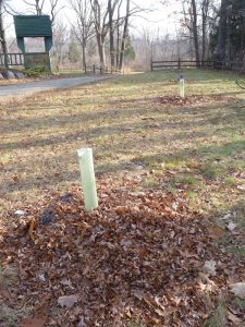 New trees planted, protected, and mulched (mulch will be planted with beneficial plants like comfrey, mints, in the spring)