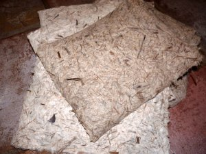 Cattail papers with abaca fiber