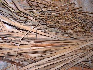 Harvested Fibers