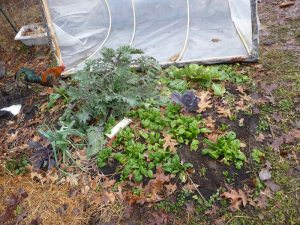 Second hoop house!
