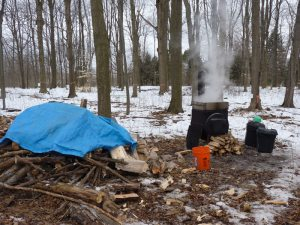 Setup with wood pile nearby