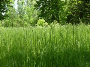 Awesome grasses!