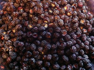 Black Raspberries washed and prepped!