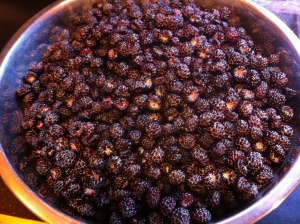 Abundant harvest of black raspberry!