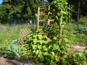 Second Bed Frame trellis + lattice trellis