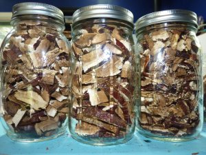 Dried reishi in a jar
