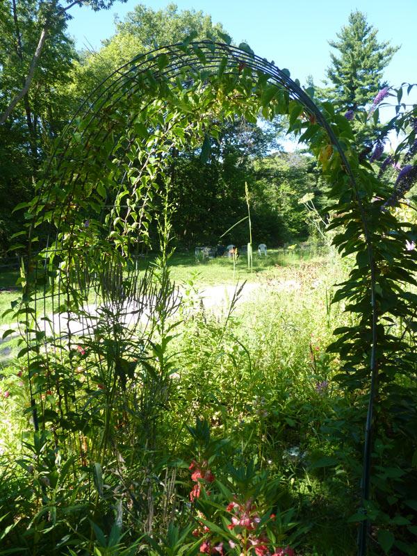 Repurposed Trellis The Druid S Garden