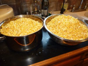 Corn ready for canning!