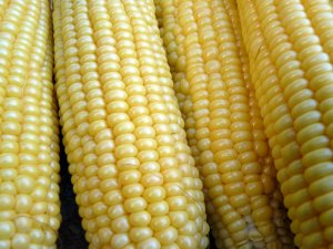 Ears of corn!