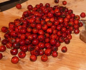 Haws ready for tincture making!