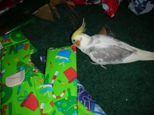 Ziggy bird helps open gifts!