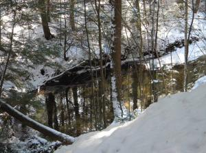 Hemlock reflected in the sacred pool