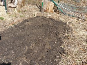 Amazing soil for lettuce and carrots!