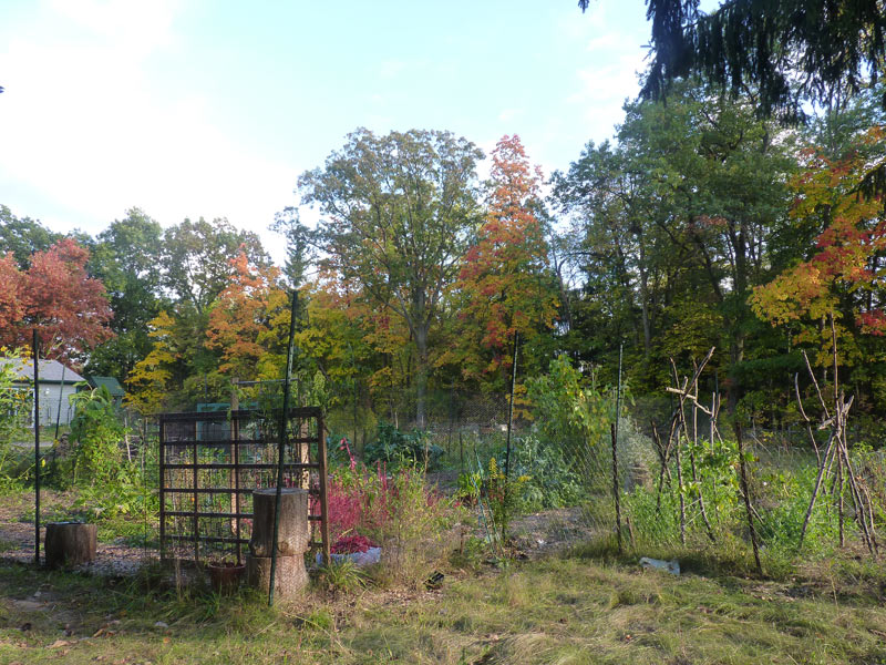 Scene From My Garden With Fall Foilage In Bloom