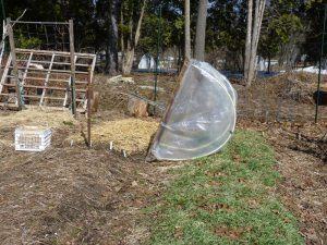 Hoop house, cover crop, garlic bed, and more!