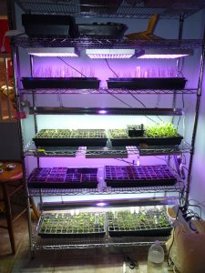 My seed growing rack - colorful!