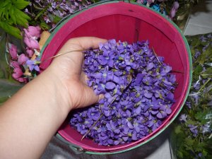 Bucket of Harvested Violets