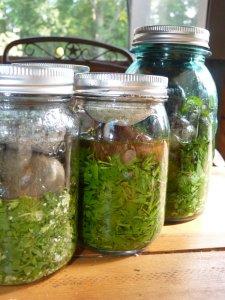 Fresh plant tinctures