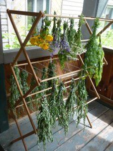 Herbs drying on a rack!
