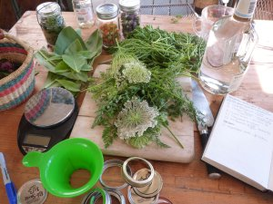 Making herbal tinctures from wildcrafted ingredients