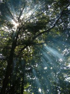 Light through the trees--a sign.