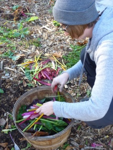 Kelsey (WOOFer) preparing chard for veggie stock