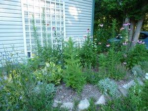 Butterfly garden near garage