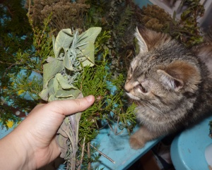 Kittens are seriously into making smudges and lend a joyful energy to the process!
