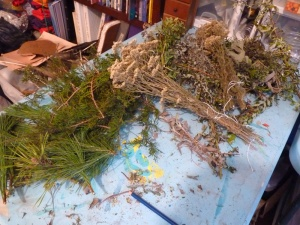 Plants dried in the fall or fresh harvested in early December for Smudges