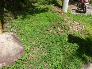 Alternative lawn cover around a hotel