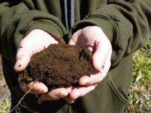Soil....the beginning of life and abundance