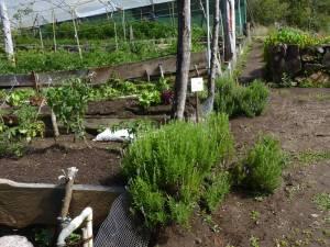 Border herbs