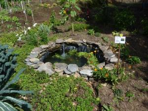 Pond for Pollenator Water Needs