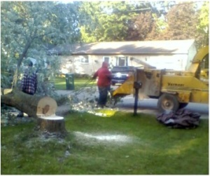 Silver Maple Removed from Front Yard