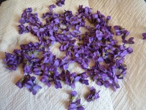 Violets drying out on a paper towel