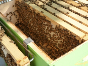 A full beehive!