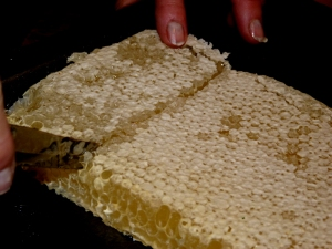 Cutting comb honey!