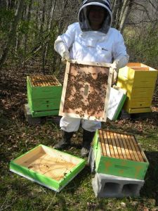 Moving beehives to a new location!