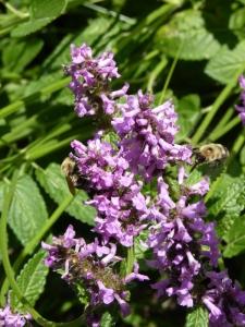Regenerating our lands for pollenators