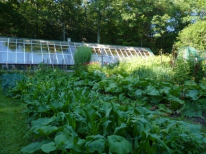 Hand-built greenhouse and gardens at Sirius Ecovillage
