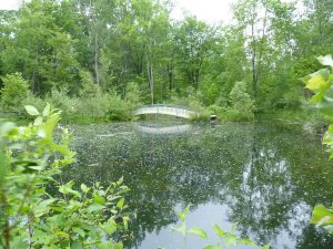 Pond regrown - beneficial bushes and groundcover