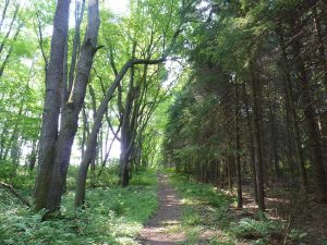 Peaceful co-existence - a path through the woods.