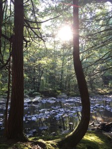 Hemlocks in the Path of the Sun