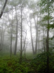 misty_forest