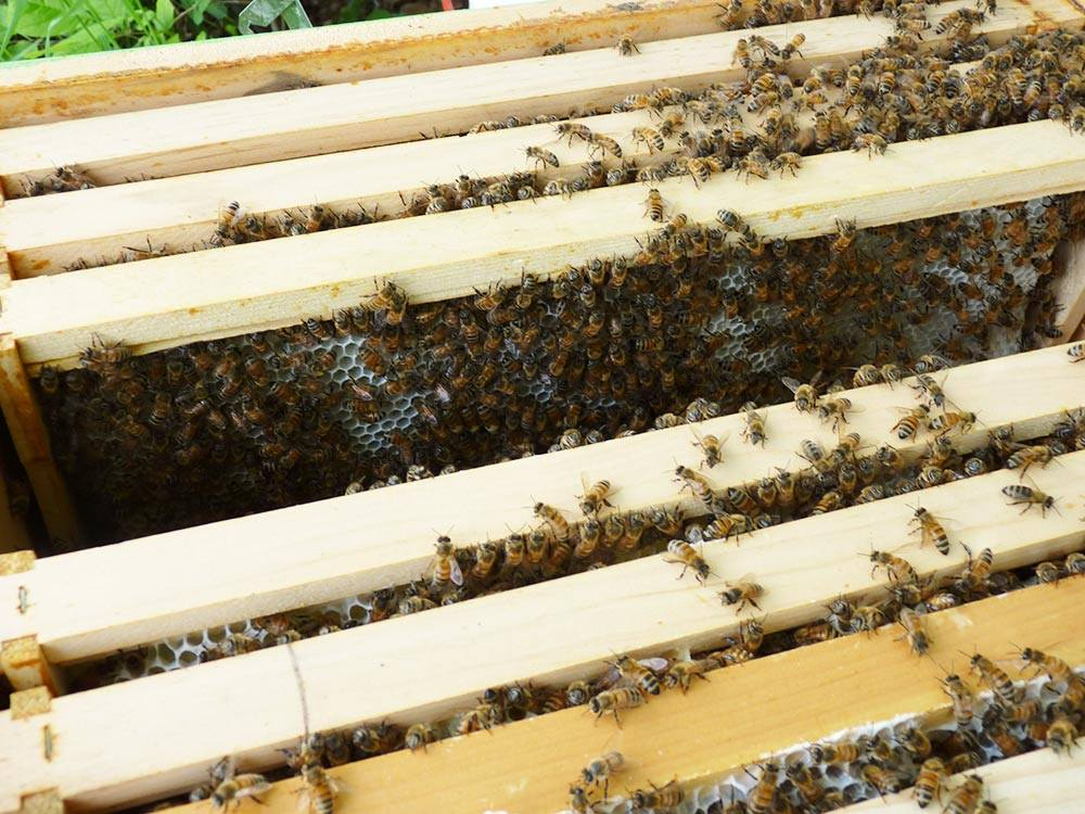 Place the Bees Inside the Hive